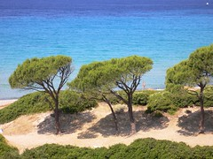 Sardegna - Mari Pintau (Luigi Strano) Tags: sardegna blue sea italy nature alberi travels holidays europa europe italia mare sardinia sardinian shore beaches trips cagliari sardinien vacanze sardaigne cerdea spiagge pini smrgsbord sardenya sardigna sardenha maripintau diamondclassphotographer sardinnya paintedsea