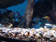 Neighbahs (kat4man) Tags: aquarium maine dmr