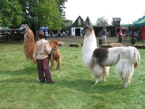 Two Llamas and a Boy