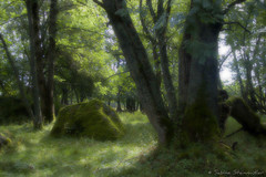 fairy land (*Sabine*) Tags: travel trees light nature forest landscape woods europa europe hiking natur reserve biosphere tschechien unesco czechrepublic landschaft wald bume bohemia wandern wanderung sumava southbohemia bhmen bhmerwald bohemianforest goldenpath goldentrail goldenersteig saltpath bavaria2006 auswahl:jahr=2006 year:uploaded=2006 sabinesteinmller