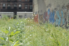 untitled (MellieMell) Tags: newyorkcity leaves 2006 september