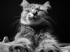 meditation (deadoll) Tags: morning light blackandwhite bw cats sun cute luz sol animal cat lights blackwhite day sleep kitty gatos pb preto sleepy lazy gato gata felino preguia pretoebranco sono kittie manh tigrado plos catu thecatwhoturnedonandoff