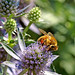 Bee Busy - by Fort Photo