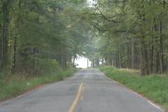 Inviting Road (T Hall) Tags: mississippi lenstagged wildlife ms refuge canon70200f4l noxubee noxubeenationalwildliferefuge