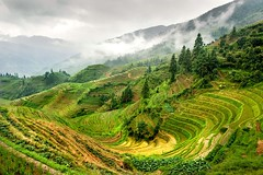 Guilin - Longsheng (jackfrench) Tags: china wow photo interesting topf75 rice guilin fans global backpackers longsheng cotcmostinteresting specland dazzlingshot