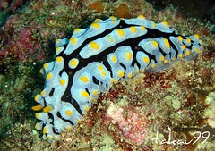 Nudibranch at Koh Tao Island, Thailand (_takau99) Tags: ocean trip travel sea vacation holiday fish macro uw nature water topv111 thailand topv555 topv333 nikon marine asia southeastasia underwater dive scuba diving 2006 topv222 september thai samui tropical coolpix scubadiving nudibranch s1 nikoncoolpixs1 tao kohtao seaslug gulfofthailand coolpixs1 greenrock group10  takau99