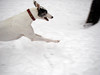 Half a Greyhound (Usonian) Tags: winter dog greyhound yard 2006 zinny utatainhalf