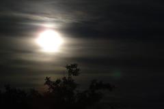 Lonely... (lecasio) Tags: moon night a45 lecasio svenseiler seiler sonydsch5 photobylecasio seilerit