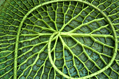 Loop (maldoit) Tags: flower green beautiful leaf great thebest topfav 555views 30faves30comments300views