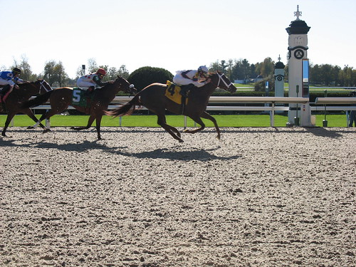 A horse race picture