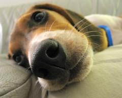 Perro vía Flickr