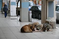 P1050192 - Let sleeping dogs lie (JB Fotofan) Tags: istanbul turkey türkei türkiye kadıköy streetphotography streetfoto strasse street sokak hund dog lumixfz1000