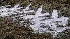 Vereiste Spur / Icy trace (ludwigrudolf232) Tags: eis spur winter