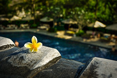 Lone-Flower (shuchen1) Tags: vacation bali exotic nature fun beach pool clifs long exposure ocean flower rock bar sunset sunrise top photos 2016 top25 top50 flickr year review yahoo text skyline outdoor