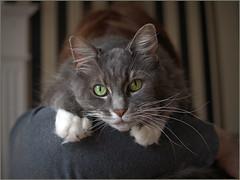 Cat (Felip1) Tags: shesthirteenyearsold 18417