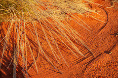 Outback detail at sunset (markgreensabroad) Tags: australia uluru ulurukatatjutanationalpark ayersrock redcentre outback red sunset goldenhour travel grass pattern atmosphere simple sand desert