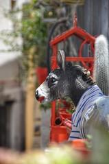 DECO DONKEY (VINCENT MOYASHI) Tags: donkey decoration france coteazur hyeres frenchriviera vacation holidays summer light focus