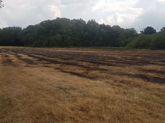 Scorched Grass (oatsy40) Tags: grass burnt