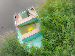 Washed Ashore (maureen.elliott) Tags: rowboat colours vergetation elora grandriver boat ashore pastelcolours fromabove perspective abandoned water
