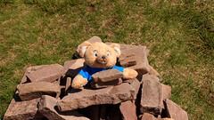 Prisoner of Freedom (RoystonVasey) Tags: canon eos m 1855mm stm zoom wales brecon beacons bbnp parc cenedlaethol bannau brycheiniog ygyrn corndu penyfan cribyn fanybig gwauncerrigllwydion cairn teddy bear