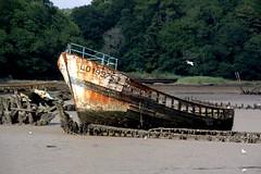 Redresser la tête après un naufrage . . . et continuer de vivre sur la berge📷🌝☉ (nickylechatreux) Tags: bateau mer bretagne cimetière naufrage carcasses eau marée bois summer