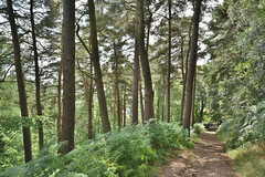 Hillside Trees (Bri_J) Tags: stanageedge peakdistrict nationalpark hathersage derbyshire uk hdr countryside nikon d7200 hillside trees path