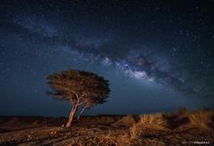 The desert tree (Antoni Figueras) Tags: ouzina morocco africa milkyway stars night sahara desert acacia sonya7rii laowa12