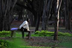 DSC_0875 (rajashekarhk) Tags: colours cubbonpark bengaluru beauty green garden gardencity lovely lovebirds peep peeping lovers enviornment city nikon nature naturephotography natural karnataka southindia rajashekar greenery capital colour park relax