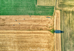Men at Work (nicolamariamietta) Tags: italy countryside country fields tree menatwork working aerial drone dji phantom4pro aerialphotography droneview oltrepopavese oltrepò colors daylight ground vertical codevilla lombardia italia it nature summer