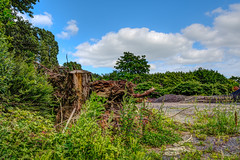 Nature (gilles_t75) Tags: d7200 france gillest hdr nikkor1024mmf3545 nikon bracketing exposurefusion highdynamicrange photohdr photomatix tonemapping bois forêt arbre nature broussaille tronc souche