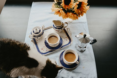 July 29th, 2018 (Lyss Nichole) Tags: coffee cat cats kitty meow morning espresso nikond600 28mm indoors inside sunlight bright table
