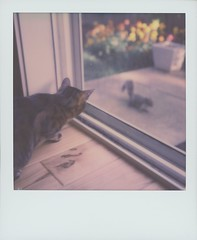 Squirrel! (feedmyhungryeye) Tags: day1 polaroidweek sx70
