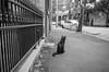 06670033 (Longfei@Photography) Tags: streetphotography blackandwhit blackandwhitephotography filmphotography analogphotography sydney australia nikonfe2 nikonfm2 voigtlander58nokton voigtlander40ultron olympusom2 olympus35sp