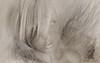 woman-6 (Poli Maurizio) Tags: woman girl female sketch portrait drawing drawingportrait abstractportrait digitalportrait actress actor celebrity hollywood pencil coloredpencil pencilportrait freehand fine art sky blackandwhite color beauty water hair artist disegno ritratto schizzo manolibera occhi chiaroscuro matita dibujos fantasy fantastic facebook twitter linkedin pinterest instagram tumblr bouchac indoor outdoor italy baby sicily ocean sea sun snow clouds man barocco illustrazione naturalism background bed concept grey conceptart atmosferic watercolor technique surrealism 3dweddingpartyfamilytravelfriendsjapanvacationlondonbeachcaliforniabirthdaytripnycsummernatureitalyfrancemeparisartflowerssanfranciscoeuropechinaflowernewyorkwaterpeoplemusiccameraphone 3daustraliachristmasusaskygermanynewcanadanightcatholidayparkbwdogfoodsnowbabysunsetcitychicagospaintaiwanjulybluetokyoenglandmexicowinterportraitgreenred 3dpolimaurizioartworkredfunindiaarchitecturegardenmacrospringthailandukseattlefestivalconcertcanonhouseberlinhawaiistreetlakezoofloridajunemaywhitevancouverkidstreecloudstorontobarcelonageotaggedhome 3dbwbwdigitalseadaytexasscotlandcarlighthalloweencampingchurchanimalstreeswashingtonrivernikonaprilbostongirlirelandgraffitiamsterdamrocklandscapeblackandwhitecatsnewyorkcitysanromeroadtripurbanhoneymoonocean 3dwatercolorsnewzealandmarchblackmuseumyorkhikingislandmountainsyellowsydneysunhongkongshowgraduationcolorfilmmountainanimallosangelesschoolmoblogphotodogs 3dartdesigndisegnosiciliacalabriabasilicatacampaniamarcheabruzzomoliselaziotoscanaemiliaromagnalombardiavenetofriuliveneziagiuliapiemontevalledaostaliguriatrentinoaltoadigepuglia 3dlandscapepaesaggiolunasolemarenuvolecittàtramontoalbamontagnecollinenebbialuceautomobilearredamentointerniesterninaturamortacieloragazzadonnauomobambinofruttabarca 3dcanigattirinascimentomodelbarocconaturalismomattepaintingfuturismoastrattismocubismosurrealismorealismoiperealismoclassicismorococomanierismoromanticismoimpression