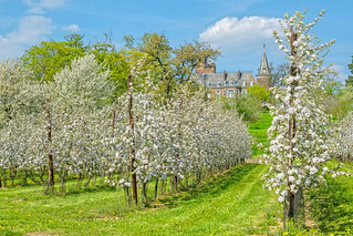 Castle in Blossoms