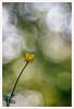 Diaplan 4 (Outlaw Pete 65) Tags: macro closeup fiore flower colori colours natura nature luce light fujixe3 meyeroptikdiaplan80mm collebeato lombardia italia
