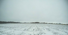 Et ce n'est pas fini (Lise1011) Tags: champs neige arbres printemps paysage olympus olympusomd trees spring landscape nature outdoor rang5 field white snow