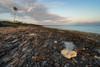 Après l'ouragan/After the hurricane/después del huracán (Ceomga) Tags: claudehamel leverdujour sunrise salidadelsol cuba plage playa beach coral