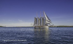 Empire Sandy - fires off her cannon. (gregoryscottclarke photography) Tags: brockville tallships sails masts galleon cannonsfire