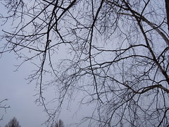 branches (cloversun19) Tags: sky branches tree russia legend story travel walking winter evening dreams