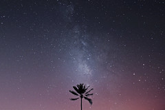 Huaka'i pō (hitmanfre1) Tags: hawaii oahu honolulu lanikai kailua sky star stars milky way milkyway night nightphotography nighttime nightfall nightsky palm tree palmtree shadow shilouette dark ocean fog purple blue red nikon d7200 long exposure longexposure starry galaxy island pacific composite