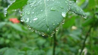Morning dew.