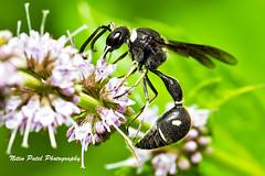 IMG_5759 (nitinpatel2) Tags: macro nature nitinpatel