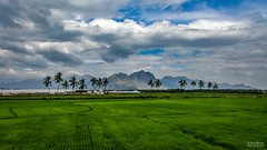 Landscape view of rural Nagercoil Town ! (Vijesh Kannan) Tags: india incredibleindia rural indianvillage indiaculture fieldsofindia indianphotography nagercoiltown tamilandu