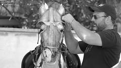 Spectacle de Rue (Laurent Spotter) Tags: spectacleféodale spectacle rue portrait blackwhite noirblanc brignoles france canoneos7d canonef100400mmf4556lisusm homme man cheval drakonia