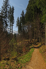 Forest path with view (aniko e) Tags: forest path hiking outdoors trees mountains zugspitze garmischpartenkirchen ellmau spring wetterstein