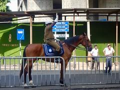 186/365: horse power (Michiko.Fujii) Tags: stoppingthetraffic halt horsepower colombo srilanka trafficpolice authority