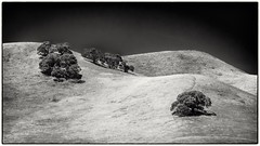 Oaks on Hillside No 4  B&W (CDay DaytimeStudios w/1,000,000 views) Tags: antiochca blackdiamondminesregionalpreserve bluesky california eastbay eastbayregionalparks grassland hills hillside ridge sanfranciscobayarea trees