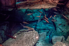 big pool (severalsnakes) Tags: missouri pentax saraspaedy tamron287528xrdi wondersofwildlife aquarium k1 springfield zoo zoom