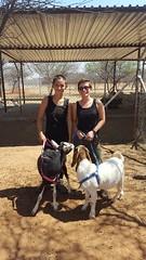 Anya Britvan_CCF_ Goats (ie3global) Tags: africa namibia cheetahconservationfund anyabritvan fall 2017 fall2017 osu